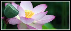 the-tao-healingart